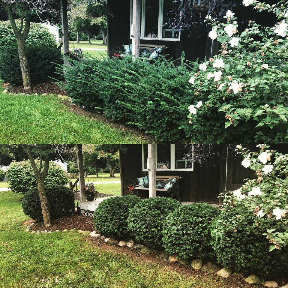 Home with trimmed shrubs and hedges in Lenawee, MI.